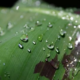 wet_banana_leaf