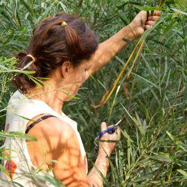 Rama-chica-2011-19