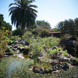jardin_botanico_viera_y_clavijo-077
