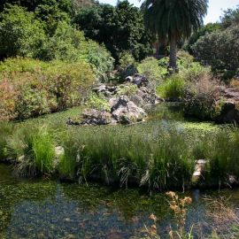 jardin_botanico_viera_y_clavijo-080