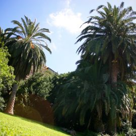 jardin_botanico_viera_y_clavijo-082