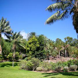 jardin_botanico_viera_y_clavijo-086