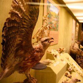 Museo Canario