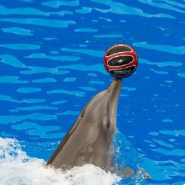 Dolphin show at Palmitos Park_1
