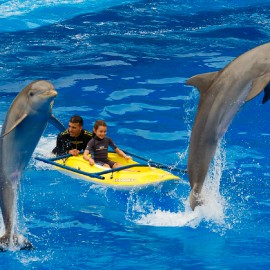 Dolphin show at Palmitos Park_3