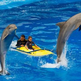 Dolphin show at Palmitos Park_3