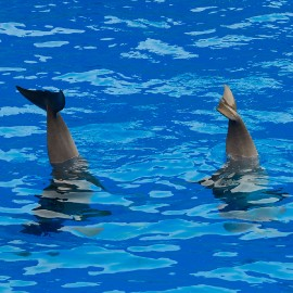 Dolphin show at Palmitos Park_5