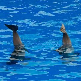 Dolphin show at Palmitos Park_5