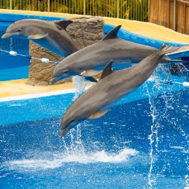 Dolphin show at Palmitos Park_6