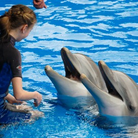 Dolphin show at Palmitos Park_7