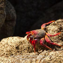 crabs-004