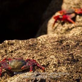crabs-005