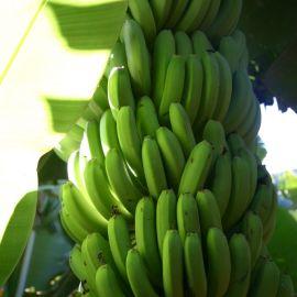bananas-008