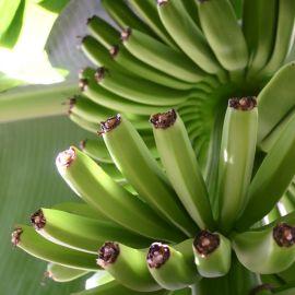 bananas-021
