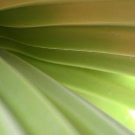 Plants (Flowers)