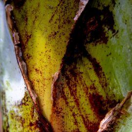 bananas-032