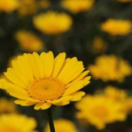 flowers-003