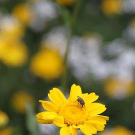 flowers-015