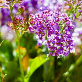 Flowers-017