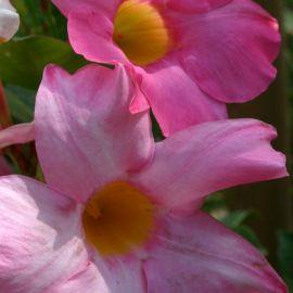 flowers-018