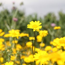 flowers-023