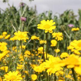 flowers-024