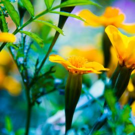 Flowers-025