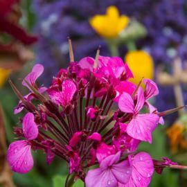 Flowers-031