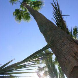 palms-002