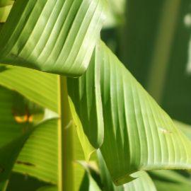 plants-020