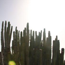 plants-023