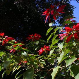 El Huerto de las Flores