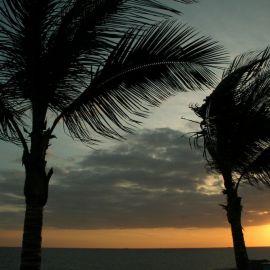 meloneras_palms-002