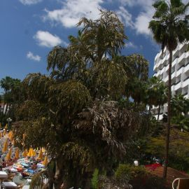 playa_del_ingles-014