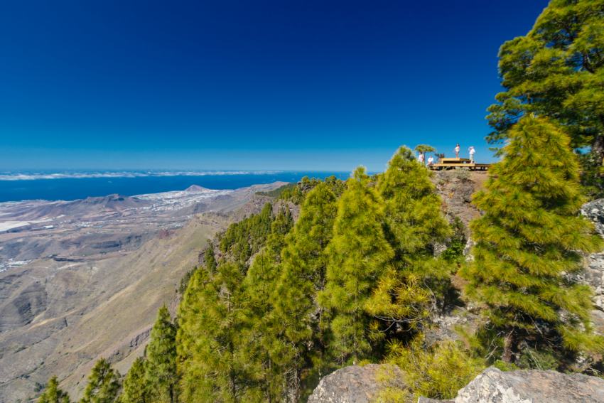 The Tamadaba forest in Gran Canaria before the 2019 fire