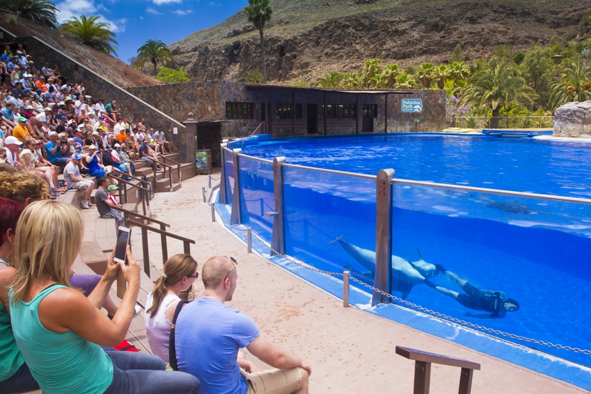 The dolphin show at Palmitos Park