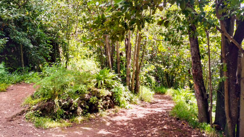 Finca de Osorio: Gran Canaria's green estate surrounded by forest