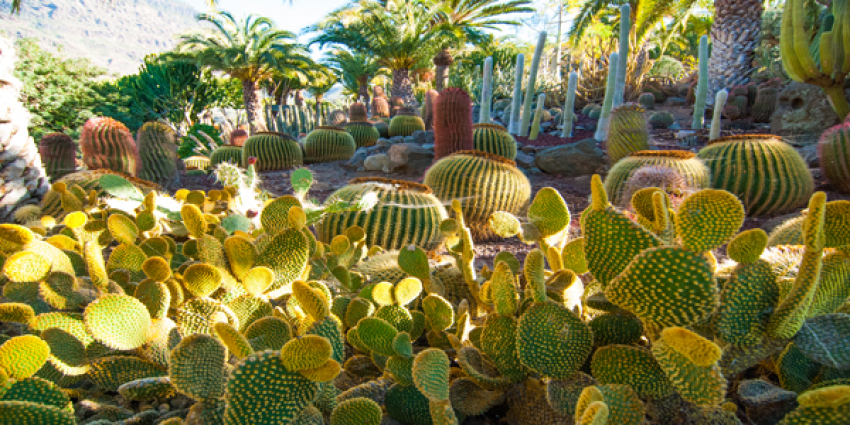 Cactualdea cactus park in Gran Canaria is well worth a stop if you drive around the island