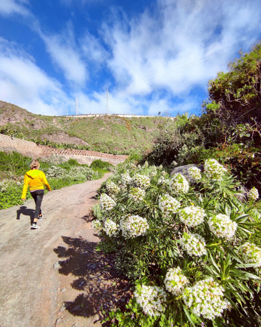 White Flower Walk In Las Palmas' Only Wild Valley