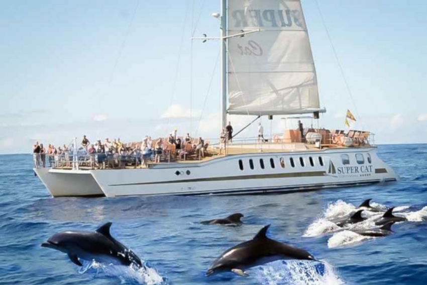 See Gran Canaria's wild dolphins on the Supercat
