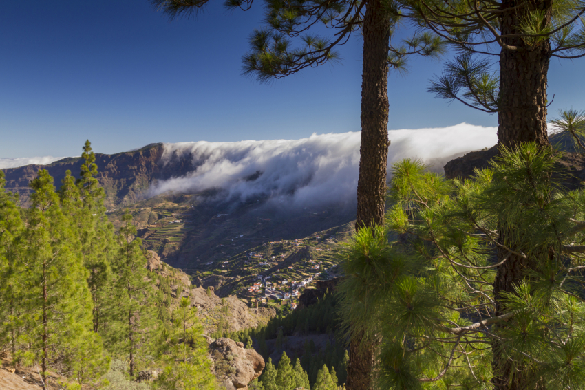 Gran Canaria plans to double its forest cover to 30% within 15 years