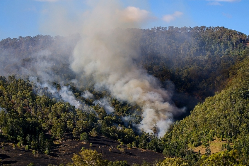 Controlled burns in Gran Canaria's forests