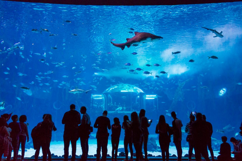 Poema de Mar: Gran Canaria's brand new aquarium