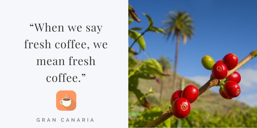 Coffee grows at Agaete in Gran Canara